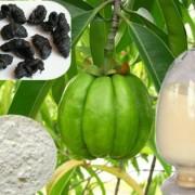 Garcinia Extract