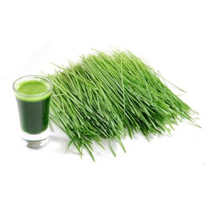 Barley Grass and Juice 1