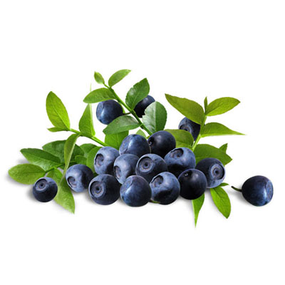 Bilberry 1