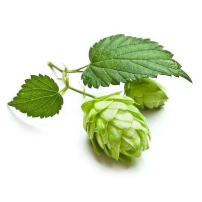 Hops Buds Powder