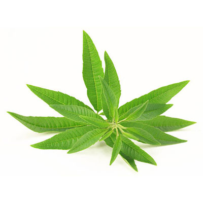 Lemon Verbena 1