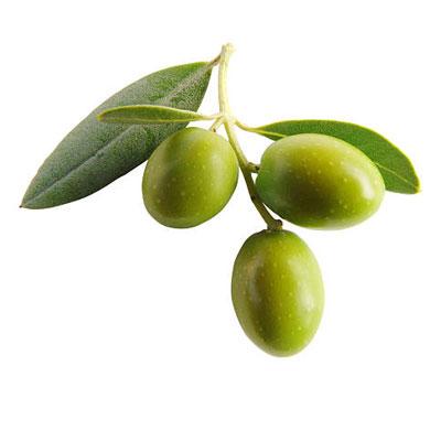 Olive Leaf 1