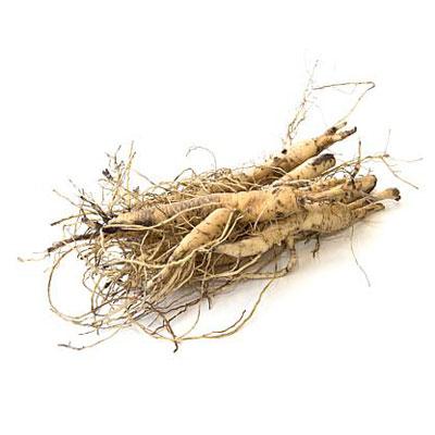 pleurisy-root