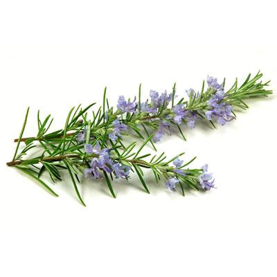 Rosemary 1