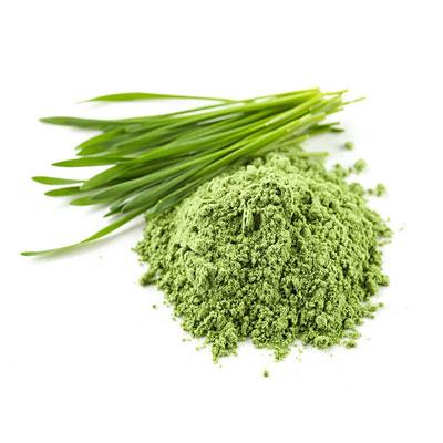 Wheat Grass 1