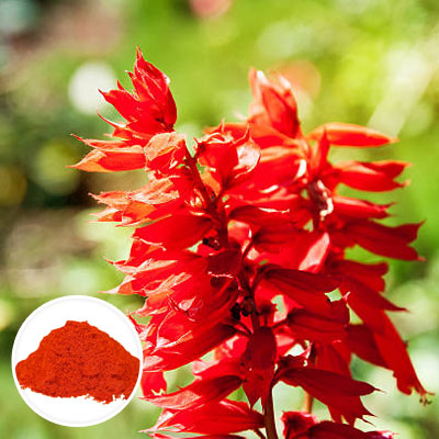 Red-sage-powder